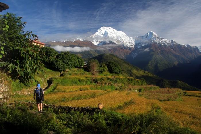 Annapurna Royal 546654564