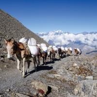 Annapurna 15415