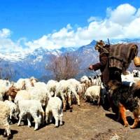 Guerrilla trek Nepal 3